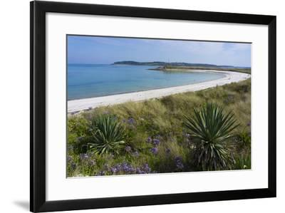 Beach on Tresco Island, Scilly Isles, United Kingdom, Europe-Peter Groenendijk-Framed Photographic Print