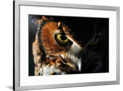 Portrait of a Great Horned Owl, Bubo Virginianus-Keith Ladzinski-Framed Photographic Print