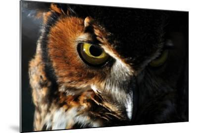 Portrait of a Great Horned Owl, Bubo Virginianus-Keith Ladzinski-Mounted Photographic Print