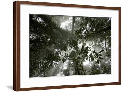 Mist in the Cloud Forest at Sombom Ridge in the Saruwaged Range-Tim Laman-Framed Photographic Print