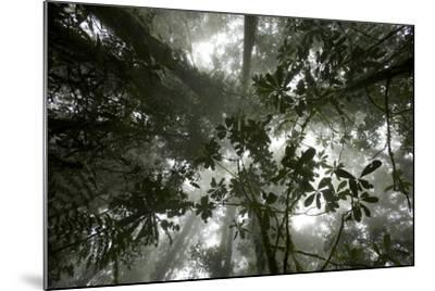 Mist in the Cloud Forest at Sombom Ridge in the Saruwaged Range-Tim Laman-Mounted Photographic Print
