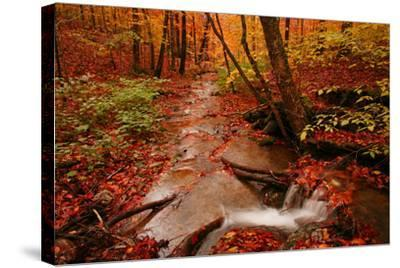 A Stream Flowing Through a Forest on an Autumn Day Near the New York/Vermont Border-Aaron Huey-Stretched Canvas Print