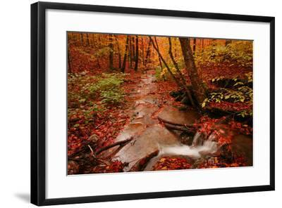 A Stream Flowing Through a Forest on an Autumn Day Near the New York/Vermont Border-Aaron Huey-Framed Photographic Print