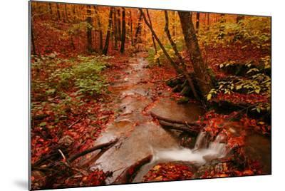 A Stream Flowing Through a Forest on an Autumn Day Near the New York/Vermont Border-Aaron Huey-Mounted Photographic Print