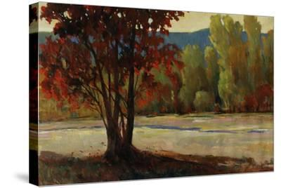Sign of Fall II-Tim O'toole-Stretched Canvas Print