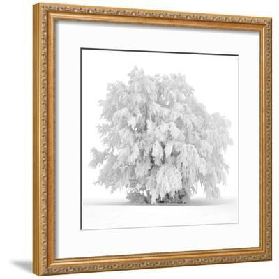 Not just white-Philippe Sainte-Laudy-Framed Photographic Print