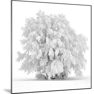 Not just white-Philippe Sainte-Laudy-Mounted Photographic Print
