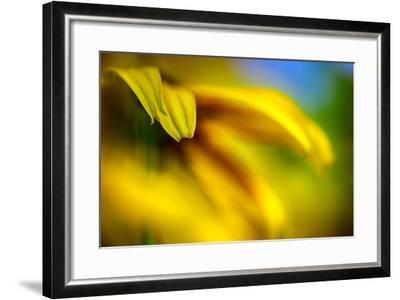 Brown-eyed Susan-Ursula Abresch-Framed Photographic Print