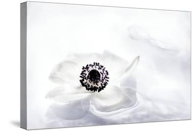 La Fleur Tranquille I-Jeanne Michel-Stretched Canvas Print