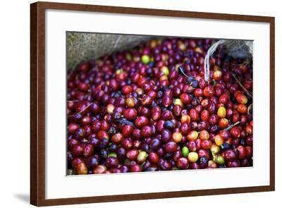 El Salvador, Central America. Carmen Organic Coffee Estate.-Connie Bransilver-Framed Photographic Print