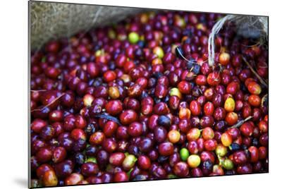 El Salvador, Central America. Carmen Organic Coffee Estate.-Connie Bransilver-Mounted Photographic Print