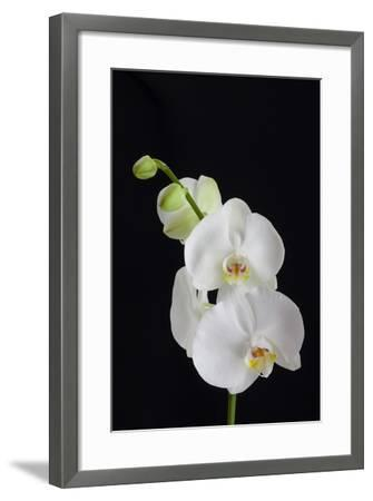 USA, Georgia, Savannah, cluster of orchids.-Joanne Wells-Framed Photographic Print
