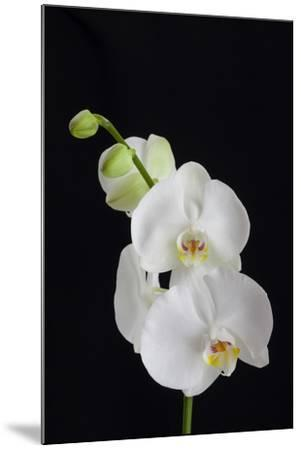 USA, Georgia, Savannah, cluster of orchids.-Joanne Wells-Mounted Photographic Print