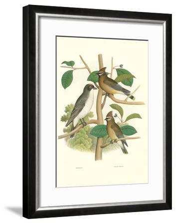 Ornithology Illustration--Framed Art Print