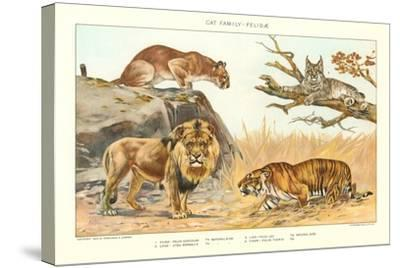 The Big Cats--Stretched Canvas Print