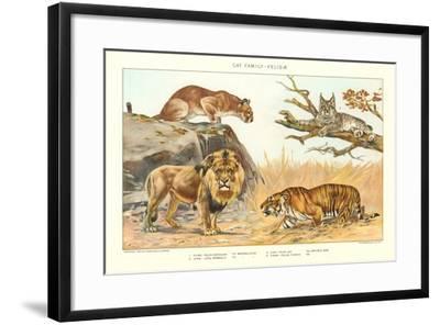 The Big Cats--Framed Art Print
