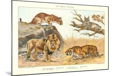 The Big Cats--Mounted Art Print