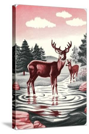 Deer in Stream--Stretched Canvas Print