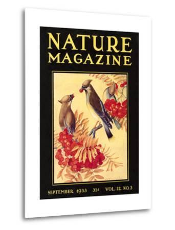 Nature Magazine Cover, Birds--Metal Print