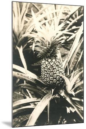 Pineapple on Plant--Mounted Art Print