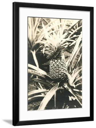 Pineapple on Plant--Framed Art Print