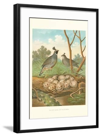 Valley Quail Nest and Eggs--Framed Art Print