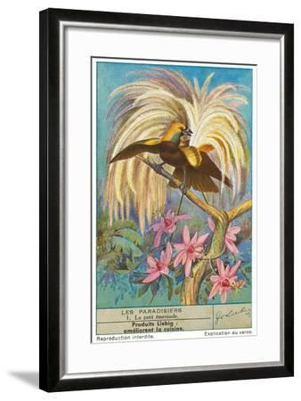 Bird of Paradise--Framed Art Print