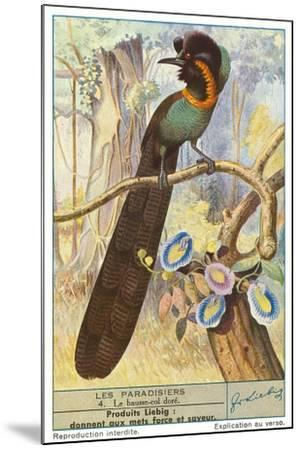 Bird of Paradise--Mounted Art Print