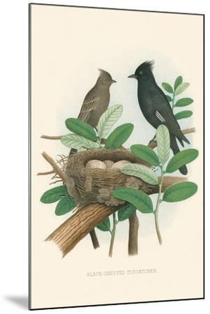 Black-Crested Flycatcher--Mounted Art Print