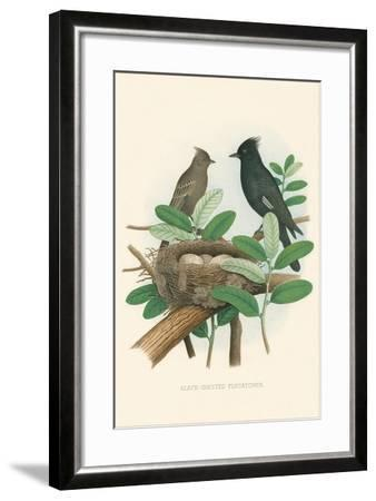 Black-Crested Flycatcher--Framed Art Print