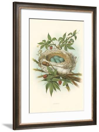Catbird Nest and Eggs--Framed Art Print