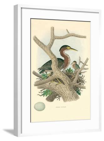 Green Heron Nest and Eggs--Framed Art Print