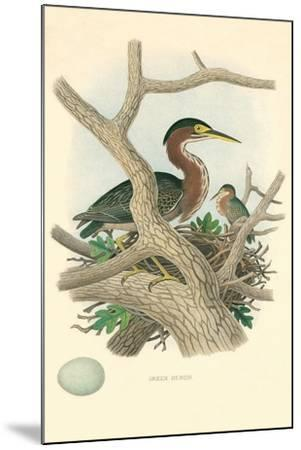 Green Heron Nest and Eggs--Mounted Art Print