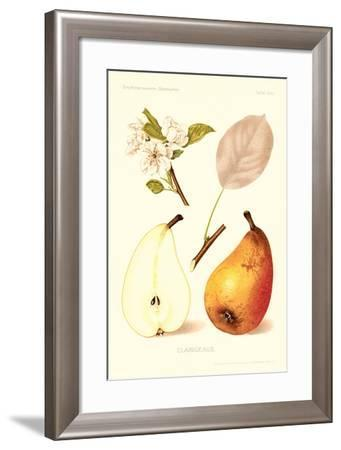 Clairgeaus Pears--Framed Art Print