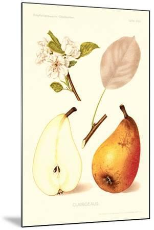 Clairgeaus Pears--Mounted Art Print