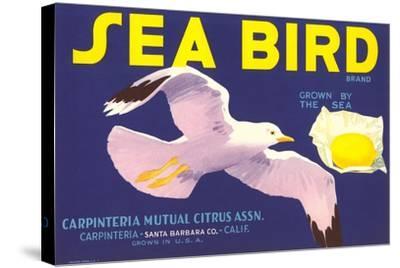 Sea Bird Lemon Label--Stretched Canvas Print