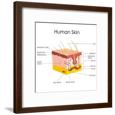 Human Skin Anatomy-stockshoppe-Framed Art Print