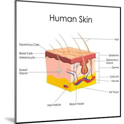 Human Skin Anatomy-stockshoppe-Mounted Art Print
