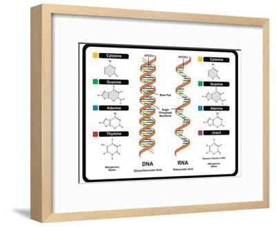 DNA and RNA-udaix-Framed Art Print