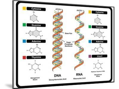DNA and RNA-udaix-Mounted Art Print