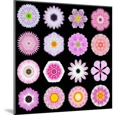 Big Collection of Various Pink Pattern Flowers-tr3gi-Mounted Art Print