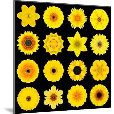 Big Collection of Various Yellow Pattern Flowers-tr3gi-Mounted Art Print