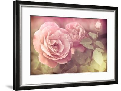 Abstract Romantic Pink Roses Flowers with Water Drops-Im Perfect Lazybones-Framed Art Print