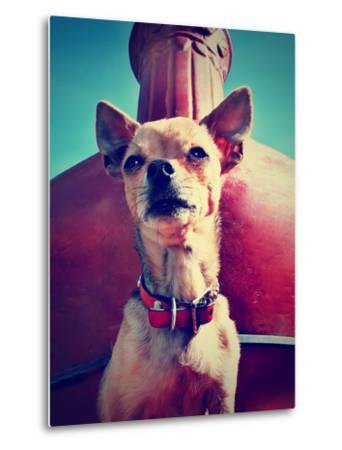 A Chihuahua Sitting in Front of a Fireplace-graphicphoto-Metal Print