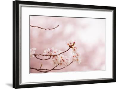 Spring Cherry Blossoms in Soft Spring Light-landio-Framed Art Print