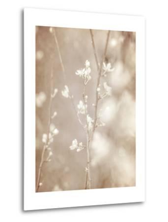 Cherry Tree Blossom, Abstract Soft Color Floral Background-Anna Omelchenko-Metal Print