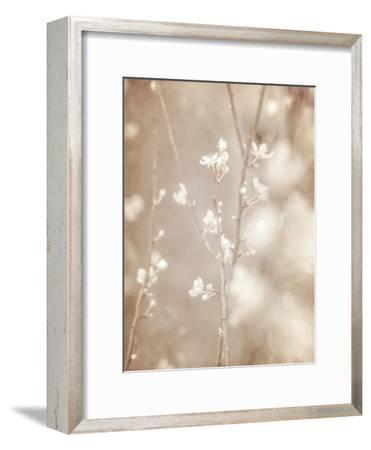 Cherry Tree Blossom, Abstract Soft Color Floral Background-Anna Omelchenko-Framed Art Print