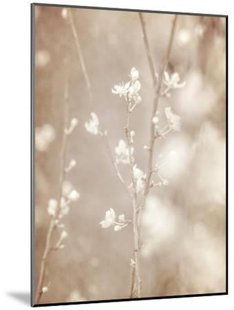 Cherry Tree Blossom, Abstract Soft Color Floral Background-Anna Omelchenko-Mounted Art Print