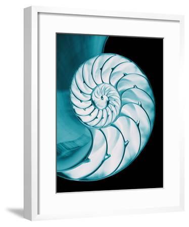 Nautilus Shell-Babar760-Framed Art Print