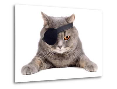 Pirate Cat- eAlisa-Metal Print